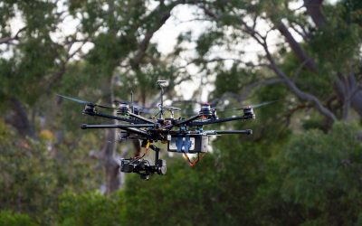Drones and artificial intelligence: the future of koala conservation
